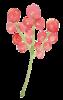 SWIEJKO_flowers_3c.png