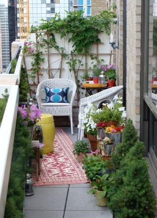 orangereia-na-balkone.jpg