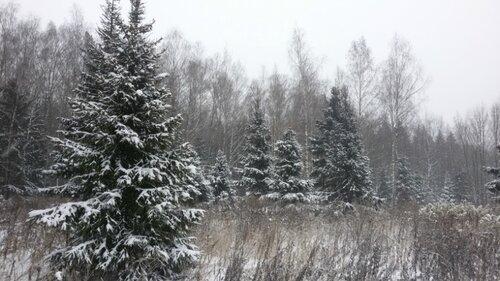Снежный лес20141231_124100.jpg