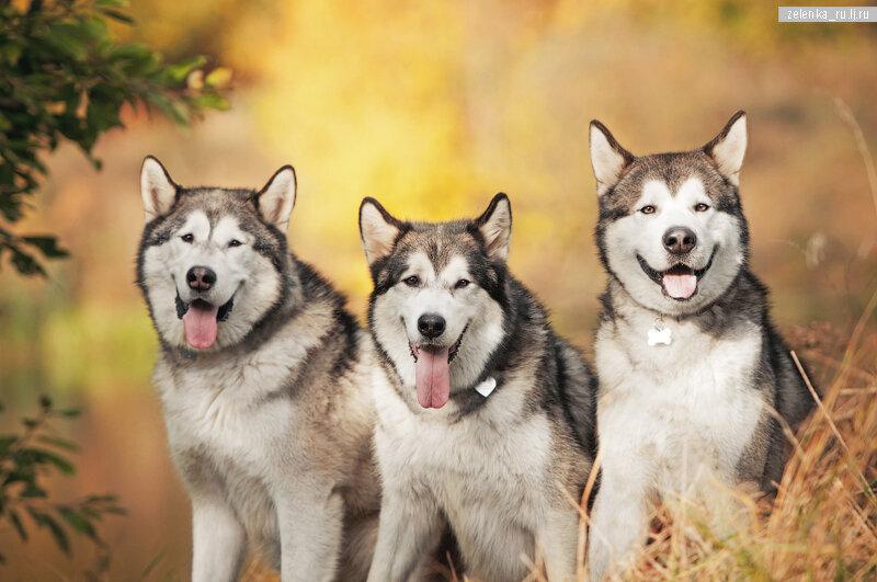 пофотографирую Ваших собак! - Страница 5 0_16643f_cc993ad_XL