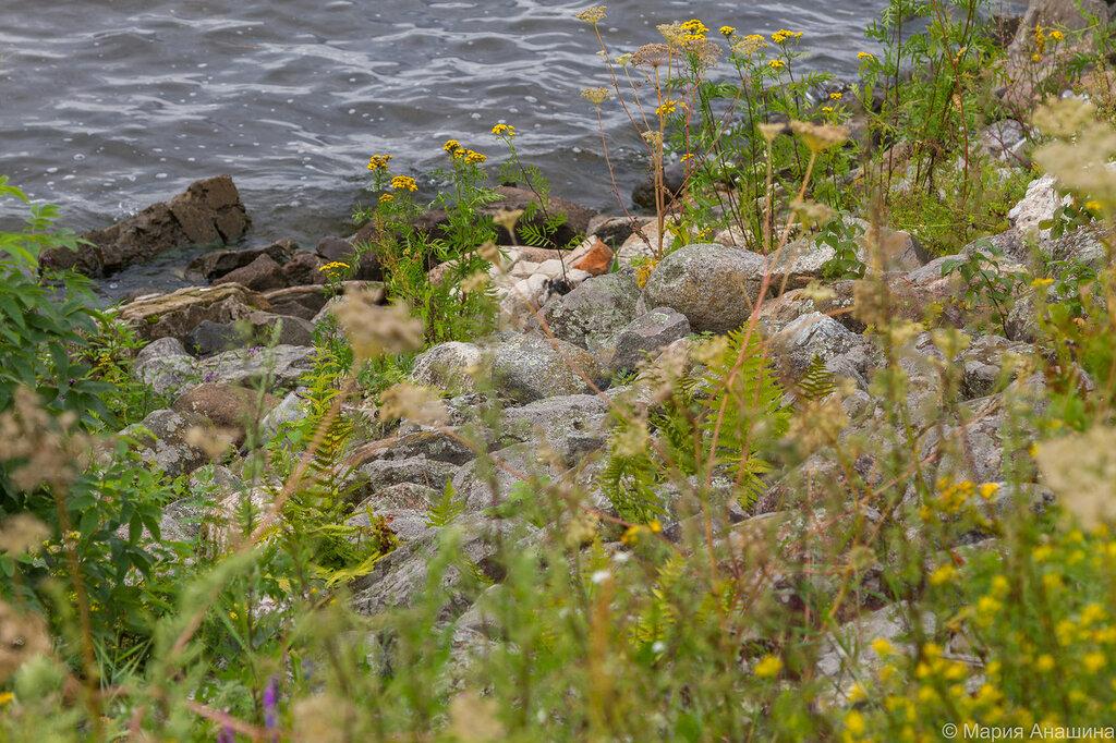 Камни, Иваньковское водохранилище