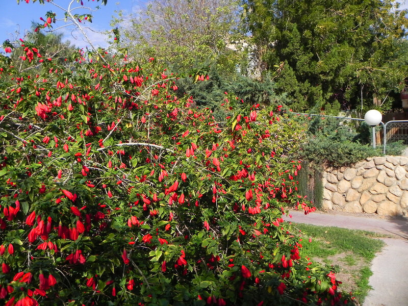 "Ботанический сад кибуца ""Эйн Геди""."