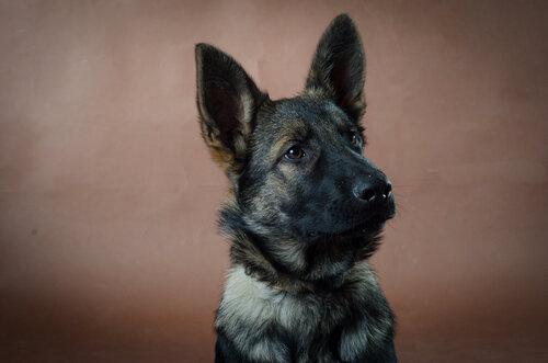 Родились щенки от Charly v. Rio Negro и Lola iz Peschanki - Страница 3 0_f4199_52f447b1_L