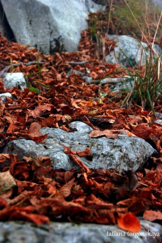 Буковые листья