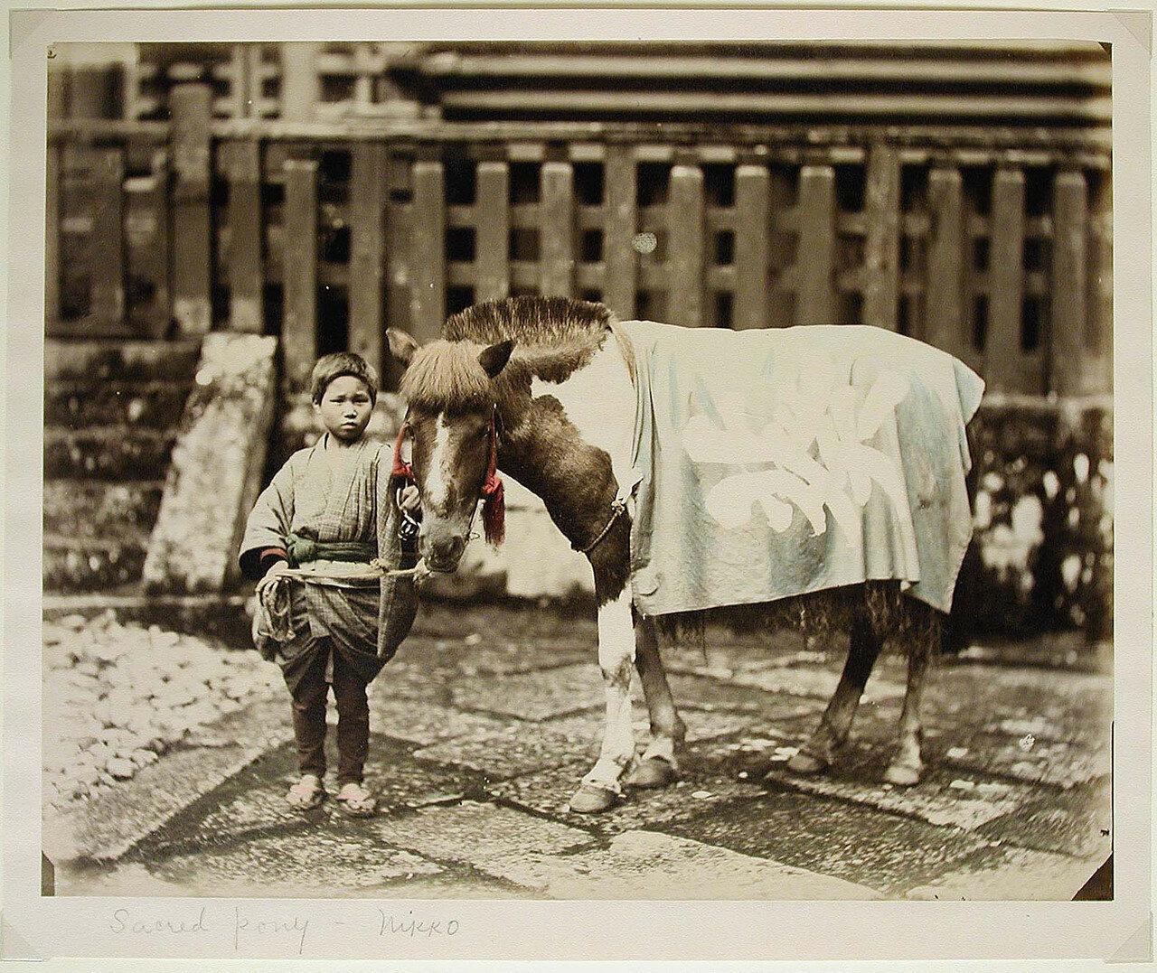 Никко. Священный пони. 1870