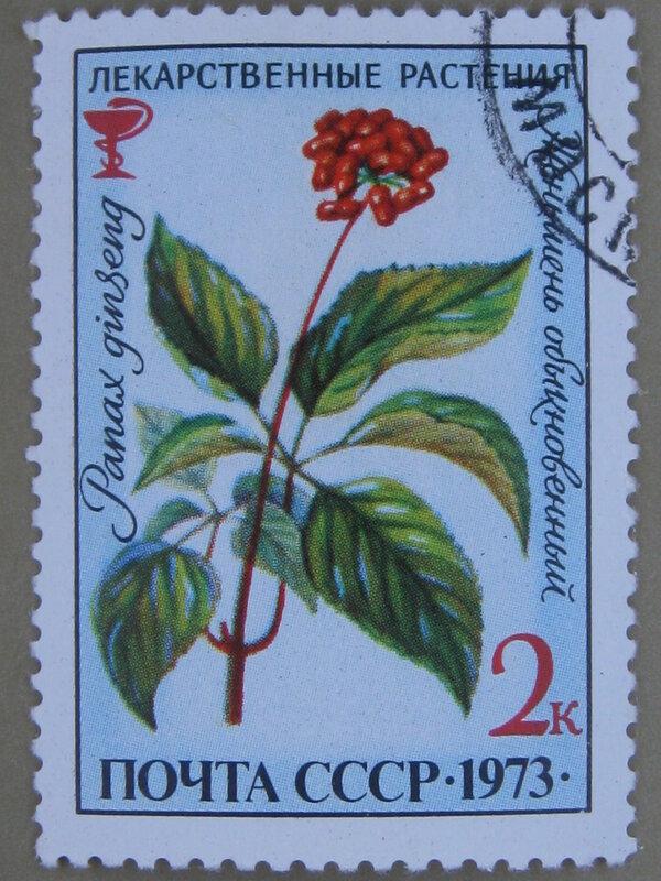 Женьшень обыкновенный (Panax ginseng).