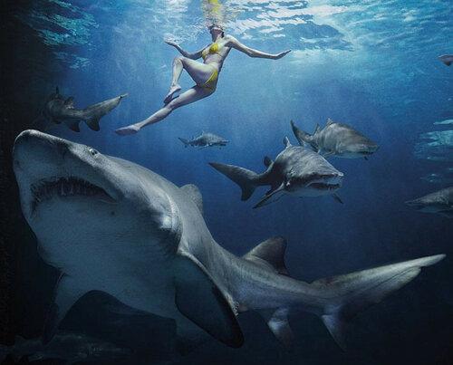 акулы.jpg
