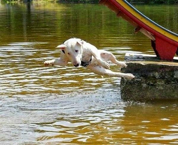 Радостные фотографии прыгающих людей и животных 0 130939 824405d2 orig