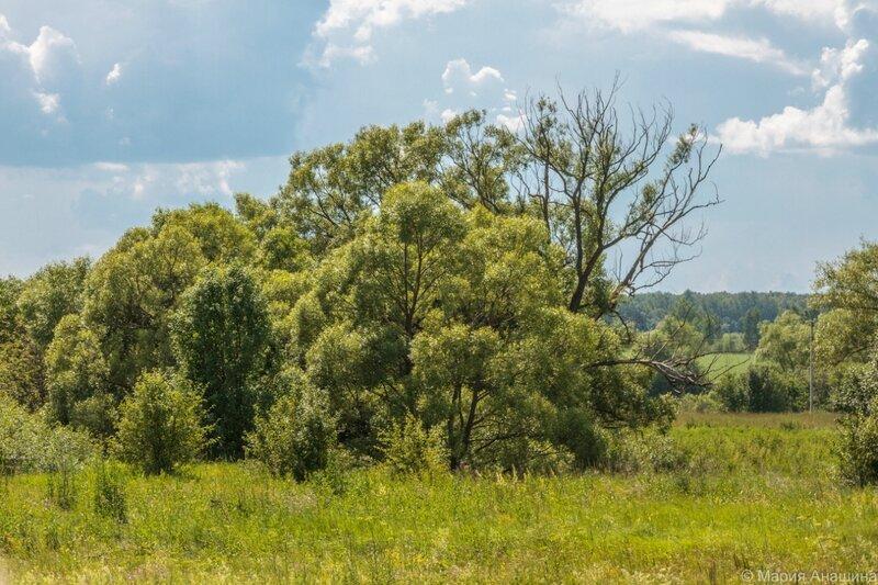 Деревья около ручья