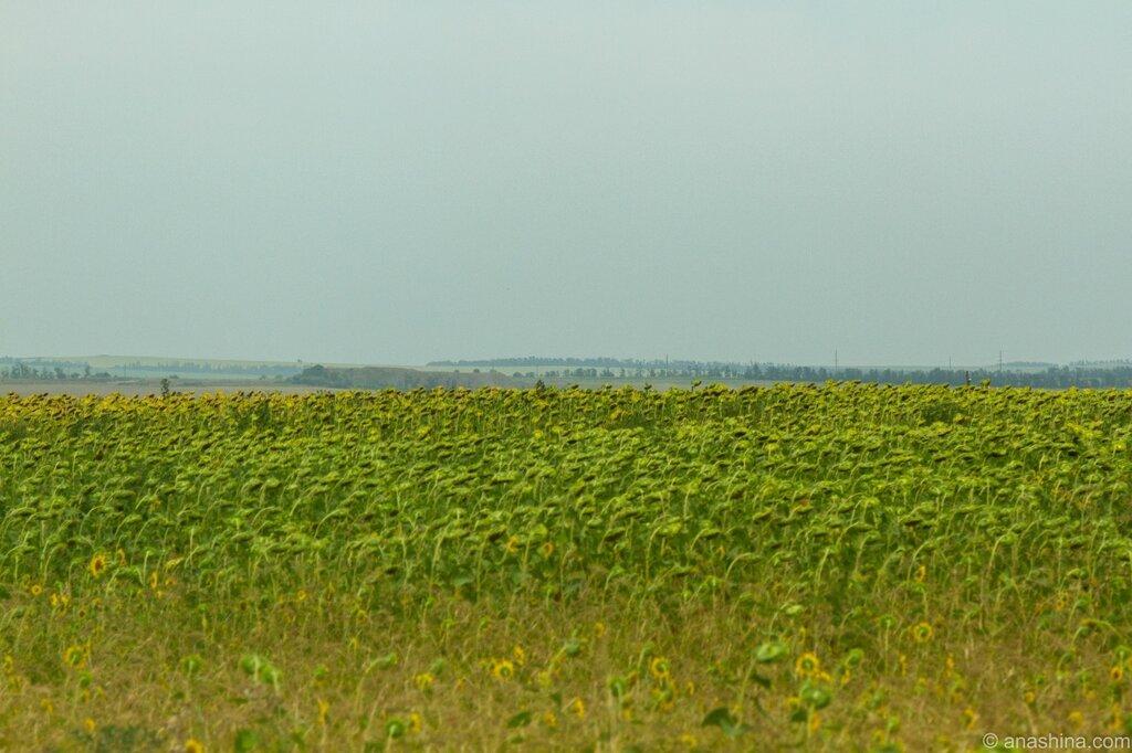 Бескрайние поля, Кубань
