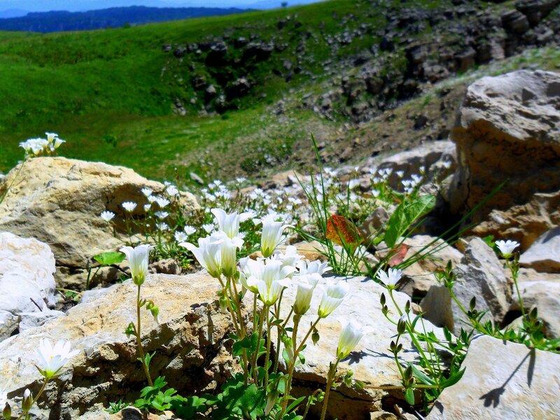 Цветы и камни ... SAM_0864.JPG
