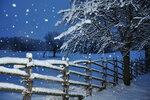 zima-sneg-snegopad-derevo.jpg