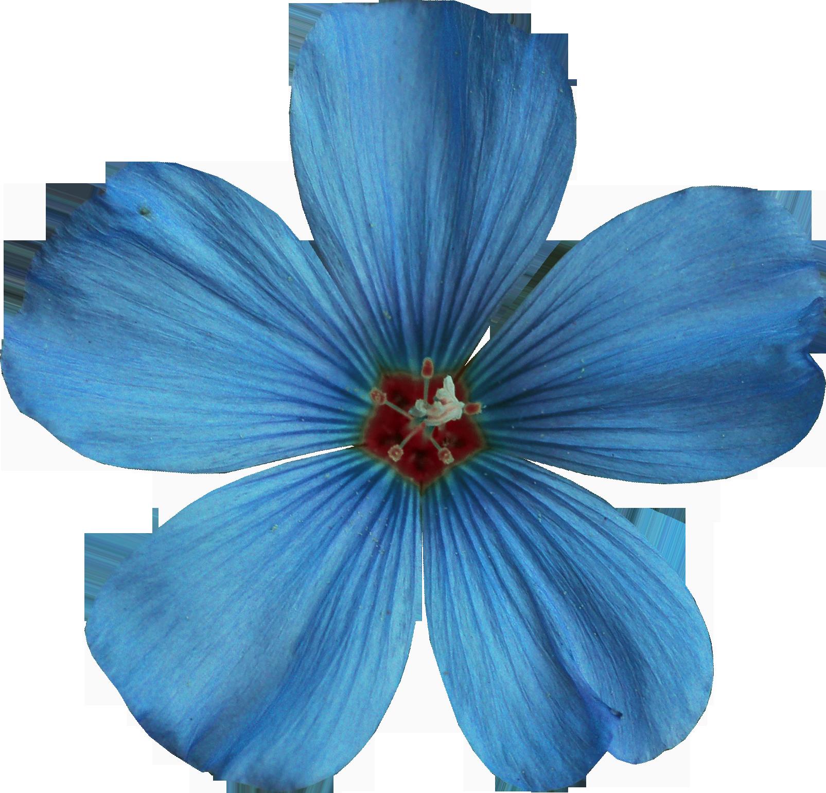 Хирургический цветок