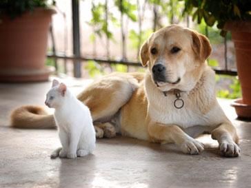 Всемирный день домашних животных.jpg