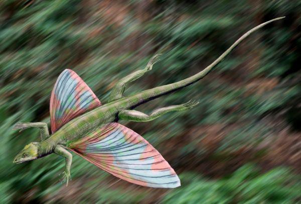 18. Eunotosaurus Eunotosaurus — вымерший род рептилий, возможно являющийся близким родственником чер