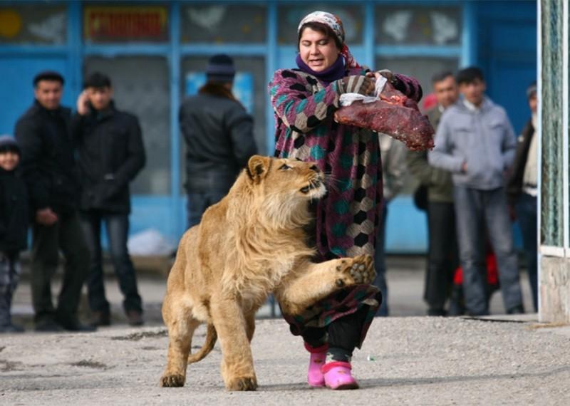 Samye-neobychnye-domashnie-zhivotnye-10-foto