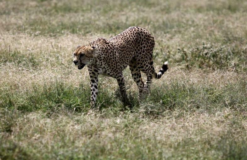 парк Серенгети — самый большой Национальный парк Танзании