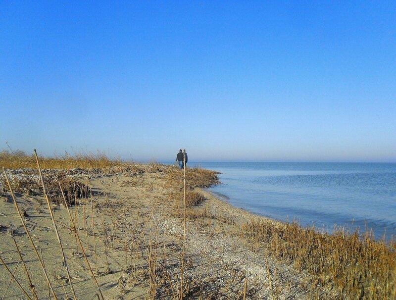 Ноябрь, на берегах пустынных... SAM_4522.JPG