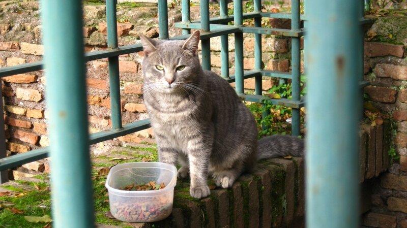 Кот, который живет в Domus Aurea
