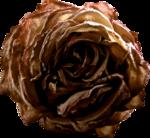 Lilas_btd_rose2.png