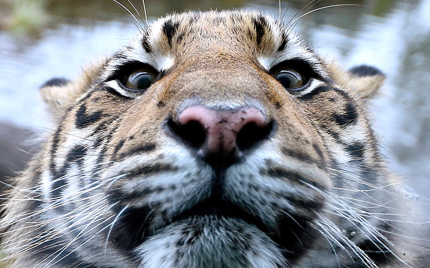 Ежегодный учёт животных в зоопарке