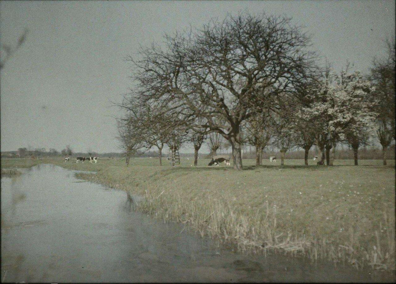 1913. Вид на канал и пастбище с коровами. Нидерланды
