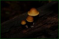 http://img-fotki.yandex.ru/get/15513/15842935.1f6/0_d9f4d_864fad8c_orig.png