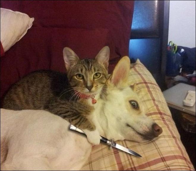 кот взял в заложники собаку