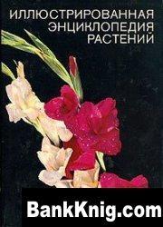 Книга Иллюстрированная энциклопедия растений