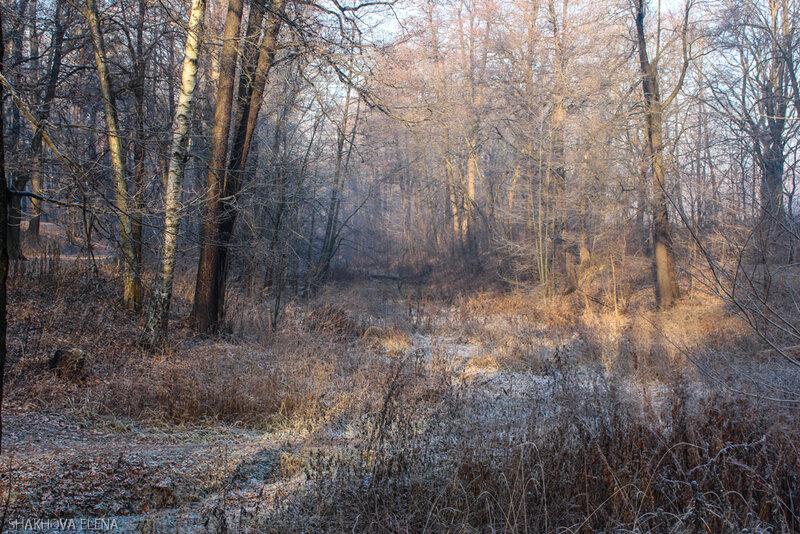 Тимирязевский лес-9.jpg