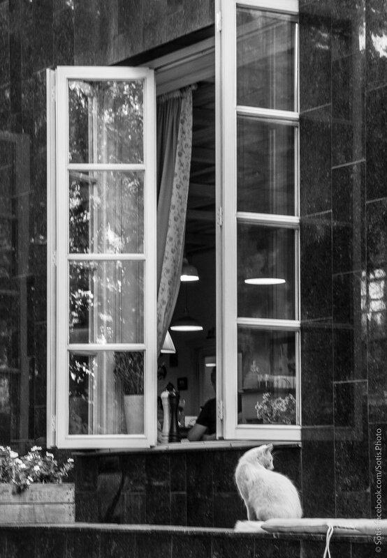 Кот и окно уличного кафе