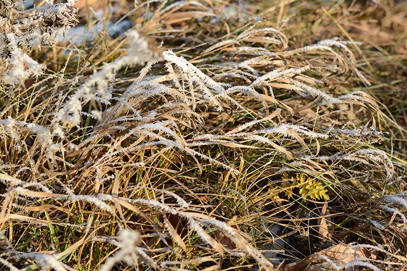 солнечный день зима2