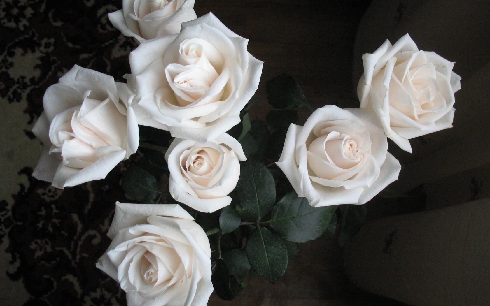 Три белых розы фото картинка найти человека