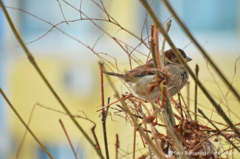 Учёт птиц, Саратов, 18 января 2015 года