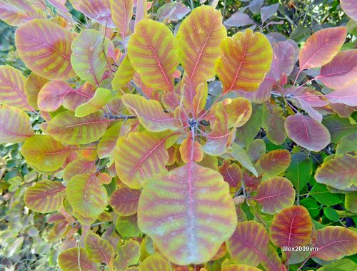 Рисовала осень на листьях