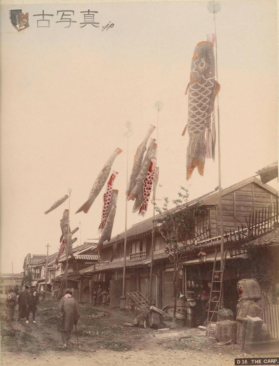 Нагасаки. Карпы