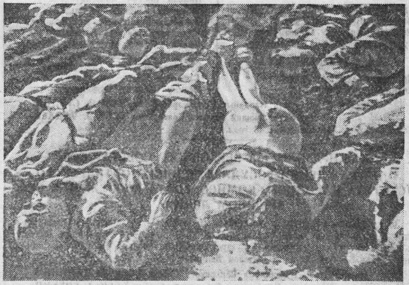«Красная звезда», 16 декабря 1943 года, что творили гитлеровцы с русскими прежде чем расстрелять, что творили гитлеровцы с русскими женщинами, зверства фашистов, зверства фашистов над женщинами, зверства фашистов над детьми, издевательства фашистов, преступления фашистов, фашистов над мирным населением