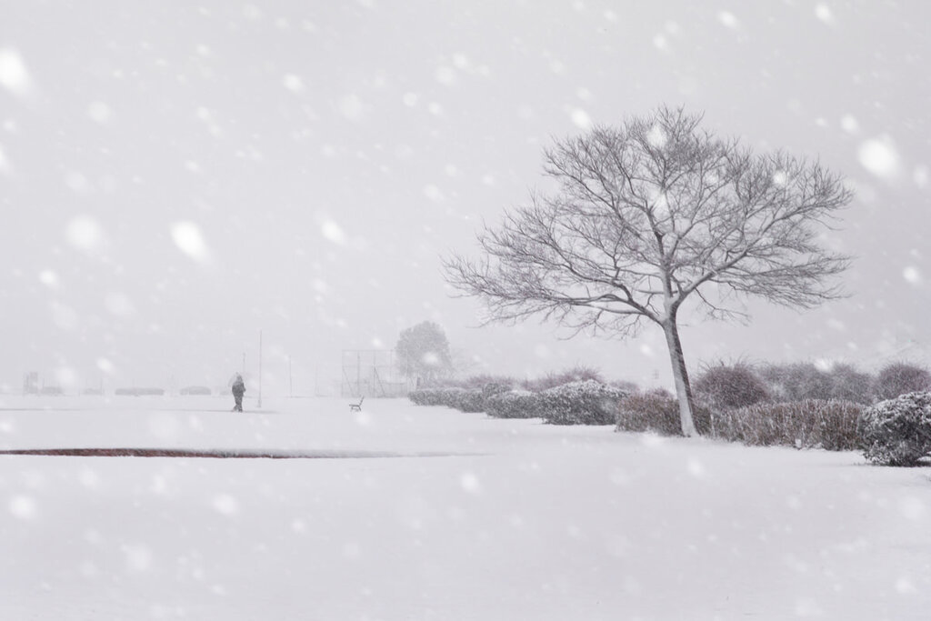 Let it snow, Asako Shimizu1280.jpg