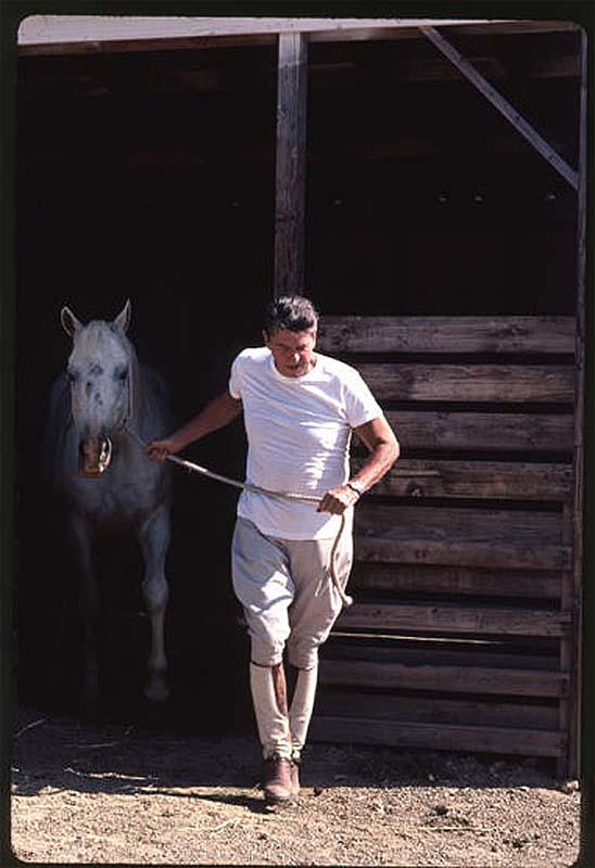 Президент Рональд Рейган выводит коня из конюшни. 1983.  фотограф Гарри Бенсон