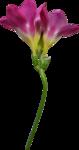весенние цветы (14).png