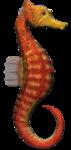 морской конек (4).png