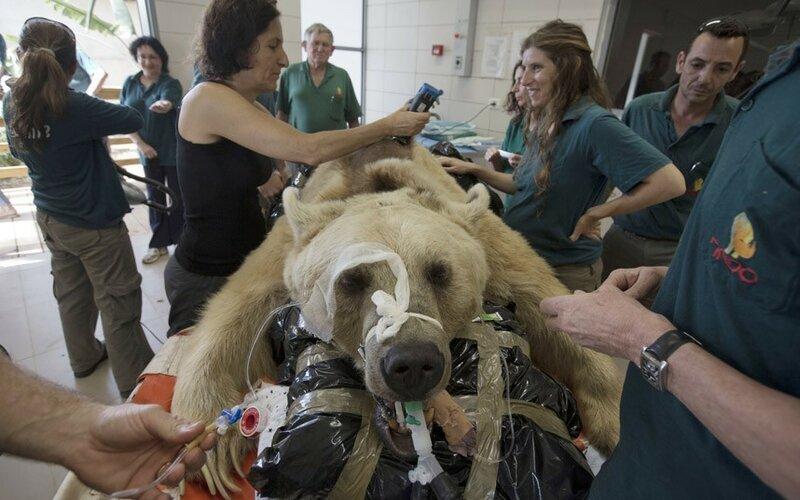 Животные на операционном столе