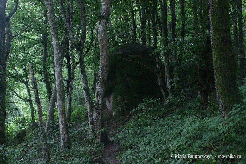 Легенды Мамеда, Краснодарский край, Сочинский Национальный парк, 15 июля 2014 года