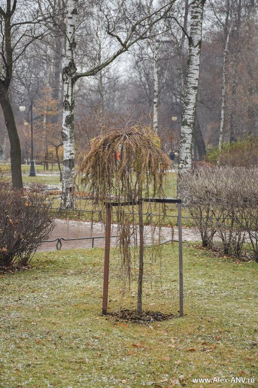 Александровский парк, маленький, уютный, красивый. Но фотографировать в нём практически нечего. Не цепляется взгляд за отдельные элементы, а всё целиком в кадр не лезет. Тем более сейчас поздняя осень, и почти все деревья стоят без листьев.