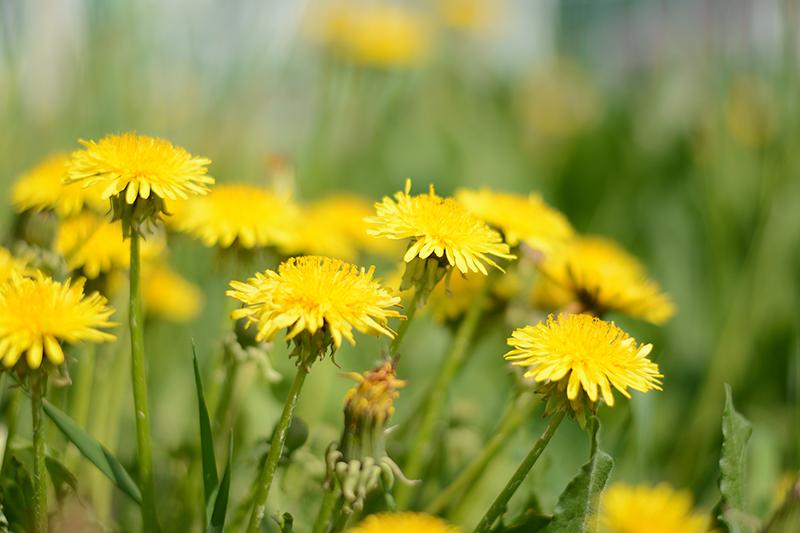весеннее поляна