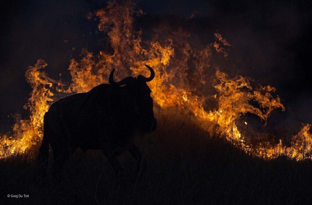 2014, Wildlife Photographers of the Year80.jpg