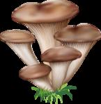 грибочки (5).png