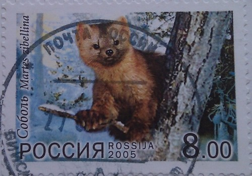 2005 соболь 8