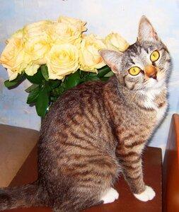 Кошка и розы