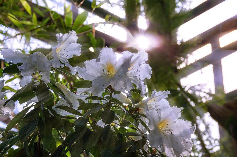 В потоке солнечного света